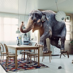 Frightened elephant runs from mouse to table.