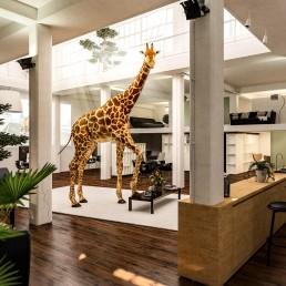 Giraffe in Büro, Atrium, 2 Etagen, Huf auf Tisch